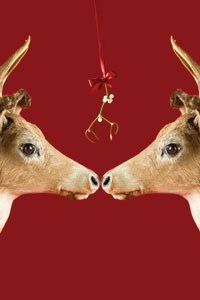 red reindeers spiral notepad